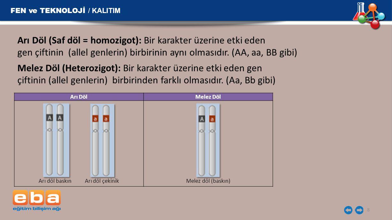 Arı Döl (Saf döl = homozigot): Bir karakter üzerine etki eden gen çiftinin (allel genlerin) birbirinin aynı olmasıdır. (AA, aa, BB gibi) 8 FEN ve TEKN
