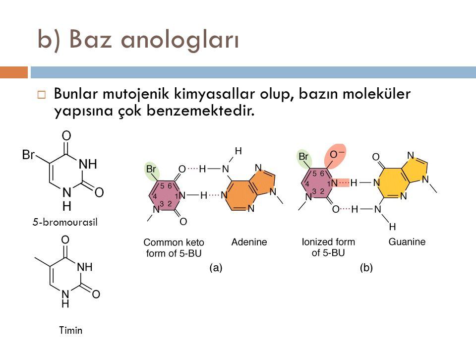 b) Baz anologları  Bunlar mutojenik kimyasallar olup, bazın moleküler yapısına çok benzemektedir. Timin 5-bromourasil