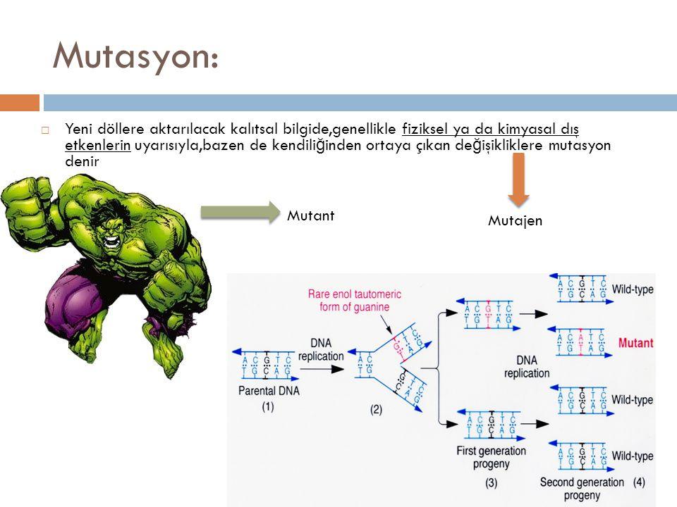 Mutasyon:  Yeni döllere aktarılacak kalıtsal bilgide,genellikle fiziksel ya da kimyasal dış etkenlerin uyarısıyla,bazen de kendili ğ inden ortaya çık