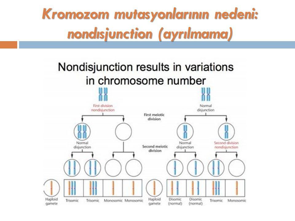 Kromozom mutasyonlarının nedeni: nondısjunction (ayrılmama)