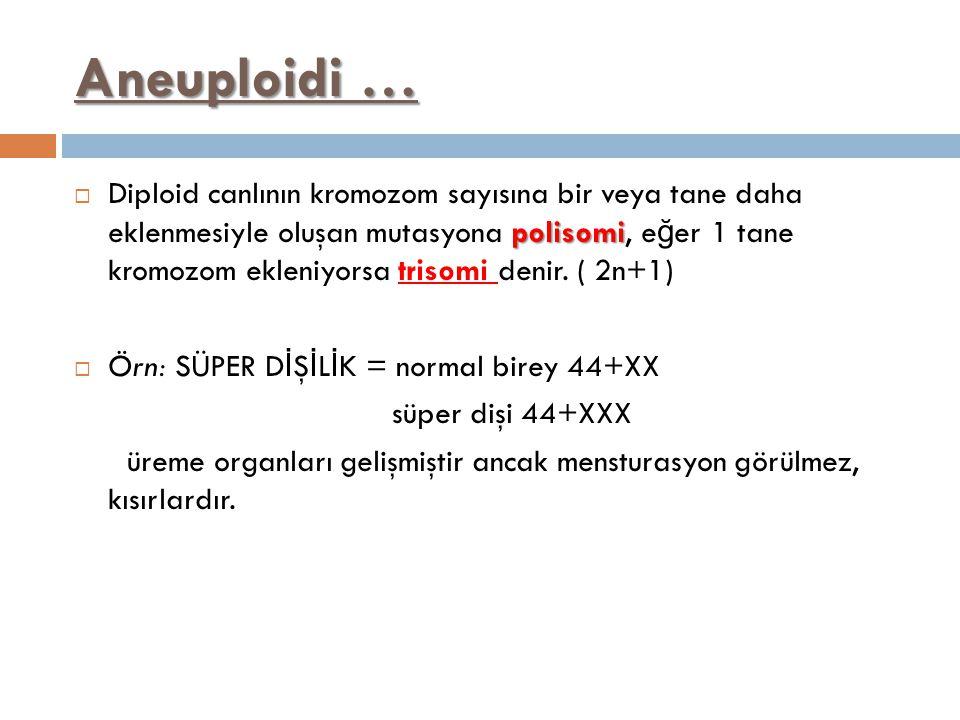 Aneuploidi … polisomi  Diploid canlının kromozom sayısına bir veya tane daha eklenmesiyle oluşan mutasyona polisomi, e ğ er 1 tane kromozom ekleniyor