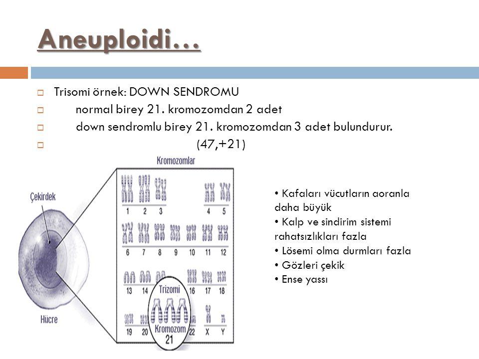 Aneuploidi…  Trisomi örnek: DOWN SENDROMU  normal birey 21. kromozomdan 2 adet  down sendromlu birey 21. kromozomdan 3 adet bulundurur.  (47,+21)