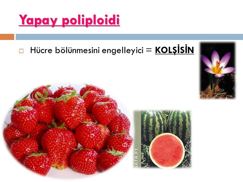 Yapay poliploidi  Hücre bölünmesini engelleyici = KOLŞ İ S İ N