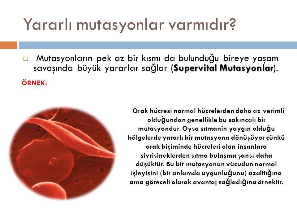 Başka bir örnek: Sıtma hastalı ğ ı, plazmodyum adı verilen tek hücreli canlılar sebe biyle bulaşır, hastalık yapar.
