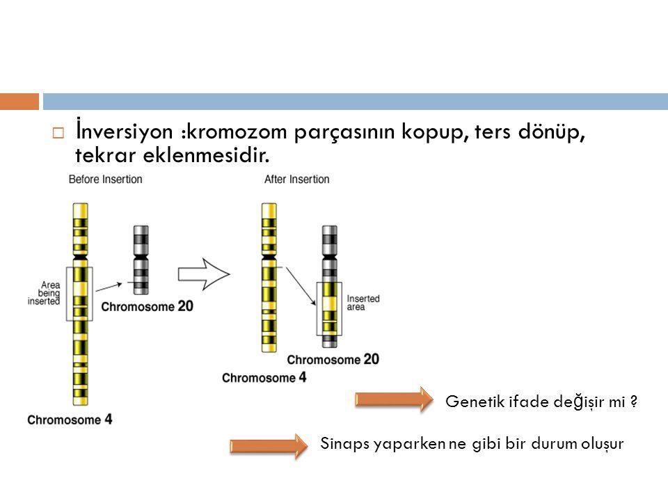  İ nversiyon :kromozom parçasının kopup, ters dönüp, tekrar eklenmesidir. Genetik ifade de ğ işir mi ? Sinaps yaparken ne gibi bir durum oluşur
