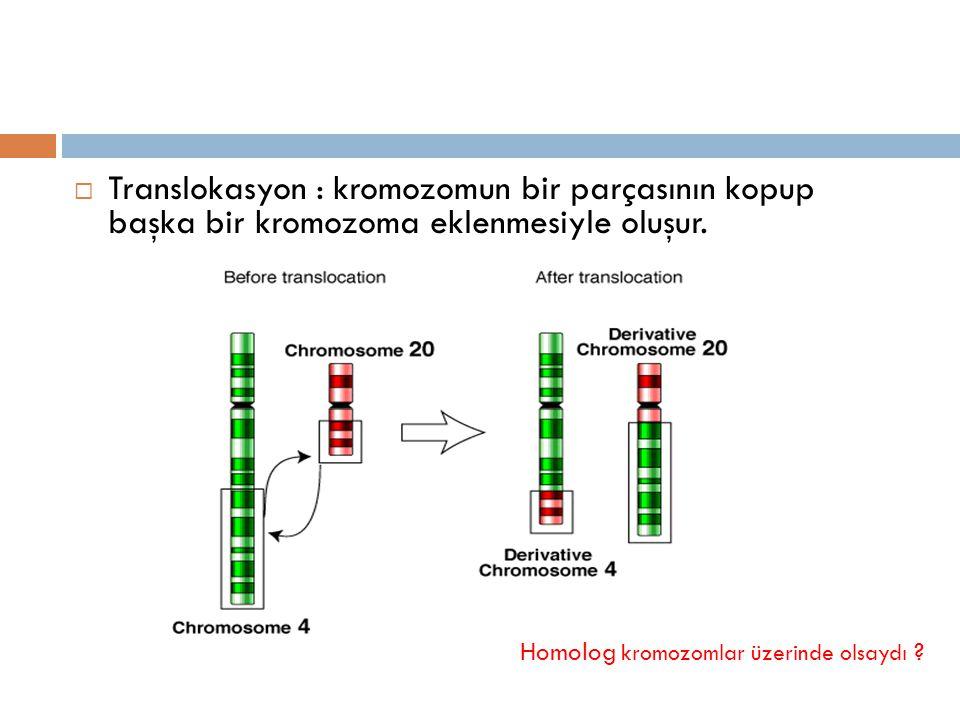  Translokasyon : kromozomun bir parçasının kopup başka bir kromozoma eklenmesiyle oluşur. Homolog kromozomlar üzerinde olsaydı ?
