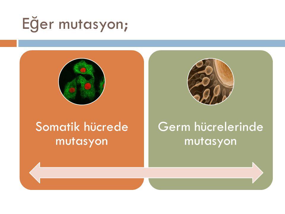 E ğ er mutasyon; Somatik hücrede mutasyon Germ hücrelerinde mutasyon