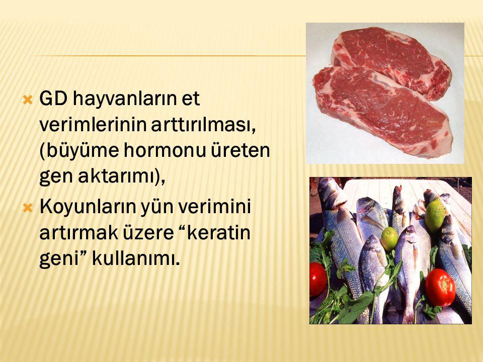 """ GD hayvanların et verimlerinin arttırılması, (büyüme hormonu üreten gen aktarımı),  Koyunların yün verimini artırmak üzere """"keratin geni"""" kullanımı"""