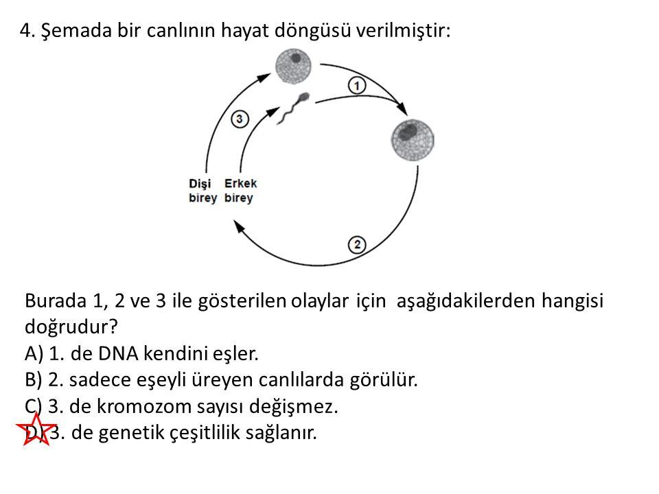 4. Şemada bir canlının hayat döngüsü verilmiştir: Burada 1, 2 ve 3 ile gösterilen olaylar için aşağıdakilerden hangisi doğrudur? A) 1. de DNA kendini