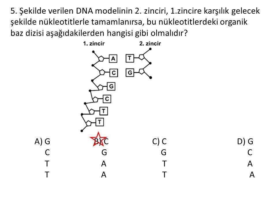 5. Şekilde verilen DNA modelinin 2. zinciri, 1.zincire karşılık gelecek şekilde nükleotitlerle tamamlanırsa, bu nükleotitlerdeki organik baz dizisi aş