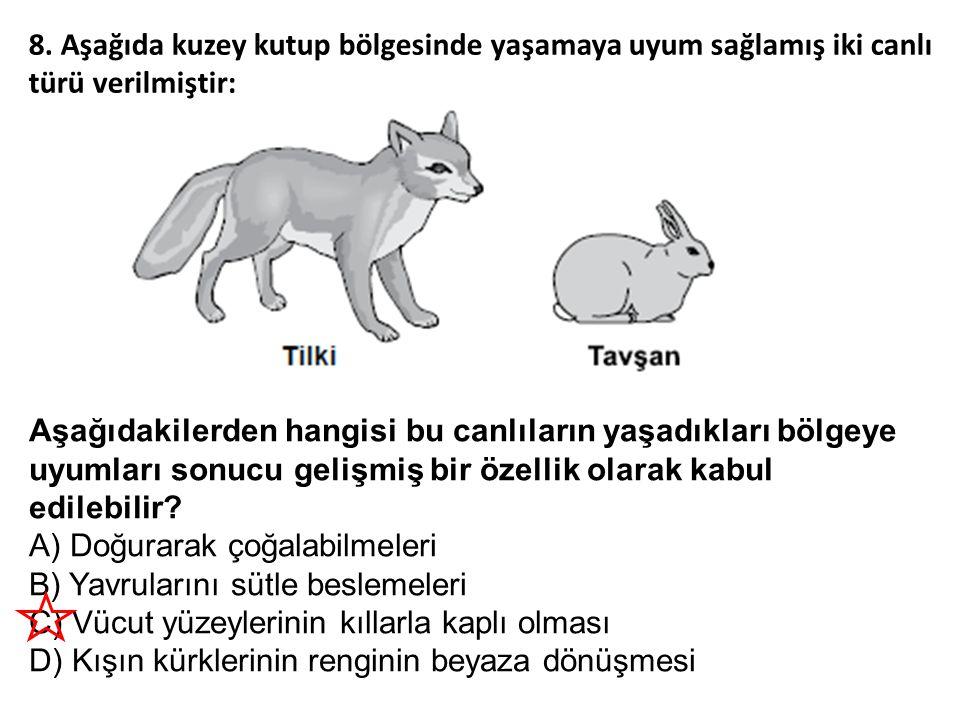 8. Aşağıda kuzey kutup bölgesinde yaşamaya uyum sağlamış iki canlı türü verilmiştir: Aşağıdakilerden hangisi bu canlıların yaşadıkları bölgeye uyumlar