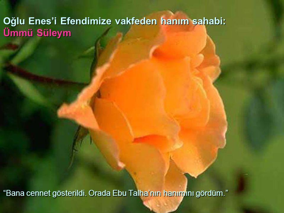 Oğlu Enes'i Efendimize vakfeden hanım sahabi: Ümmü Süleym Bana cennet gösterildi.