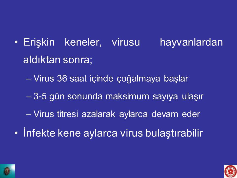 Erişkin keneler, virusu hayvanlardan aldıktan sonra; –Virus 36 saat içinde çoğalmaya başlar –3-5 gün sonunda maksimum sayıya ulaşır –Virus titresi aza