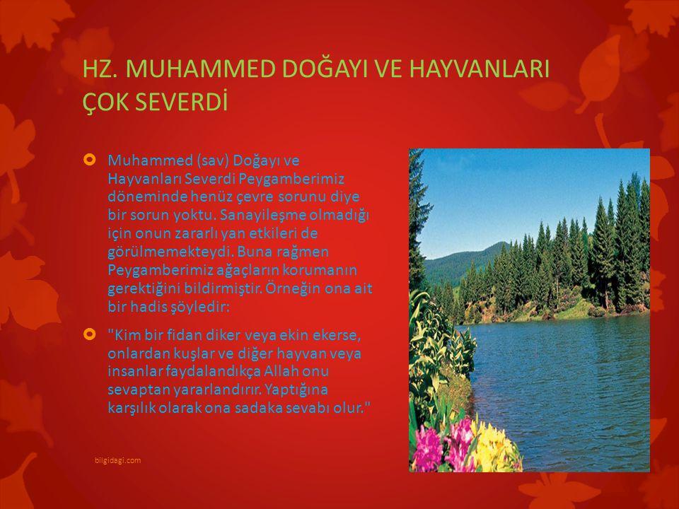 HZ. MUHAMMED DOĞAYI VE HAYVANLARI ÇOK SEVERDİ  Muhammed (sav) Doğayı ve Hayvanları Severdi Peygamberimiz döneminde henüz çevre sorunu diye bir sorun