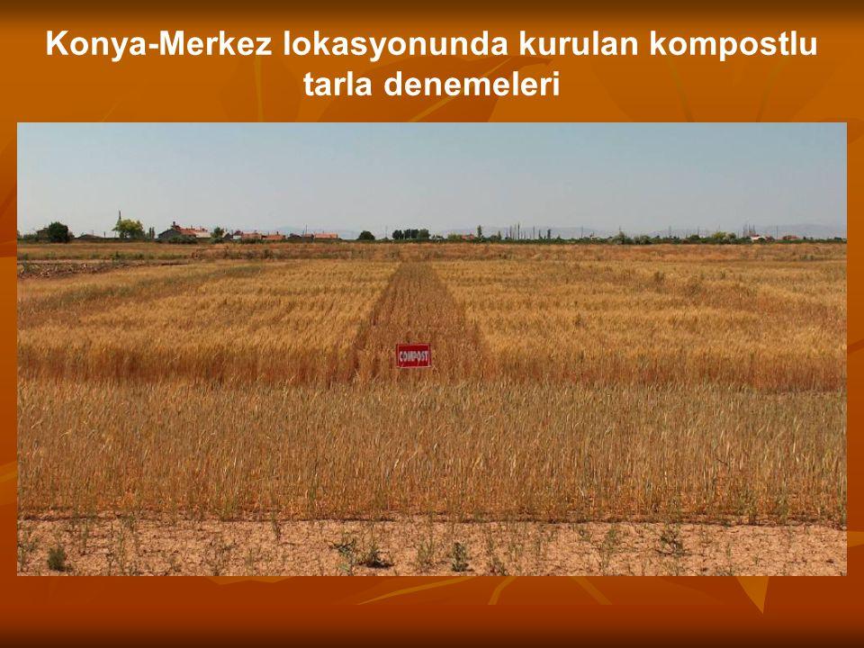 Konya-Merkez lokasyonunda kurulan kompostlu tarla denemeleri