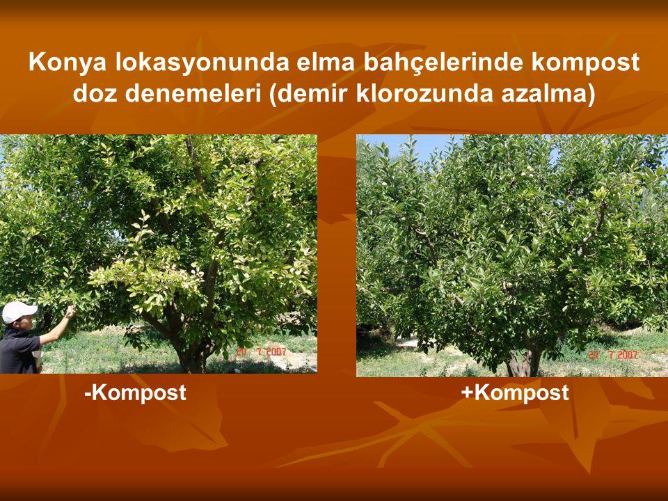-Kompost +Kompost Konya lokasyonunda elma bahçelerinde kompost doz denemeleri (demir klorozunda azalma)