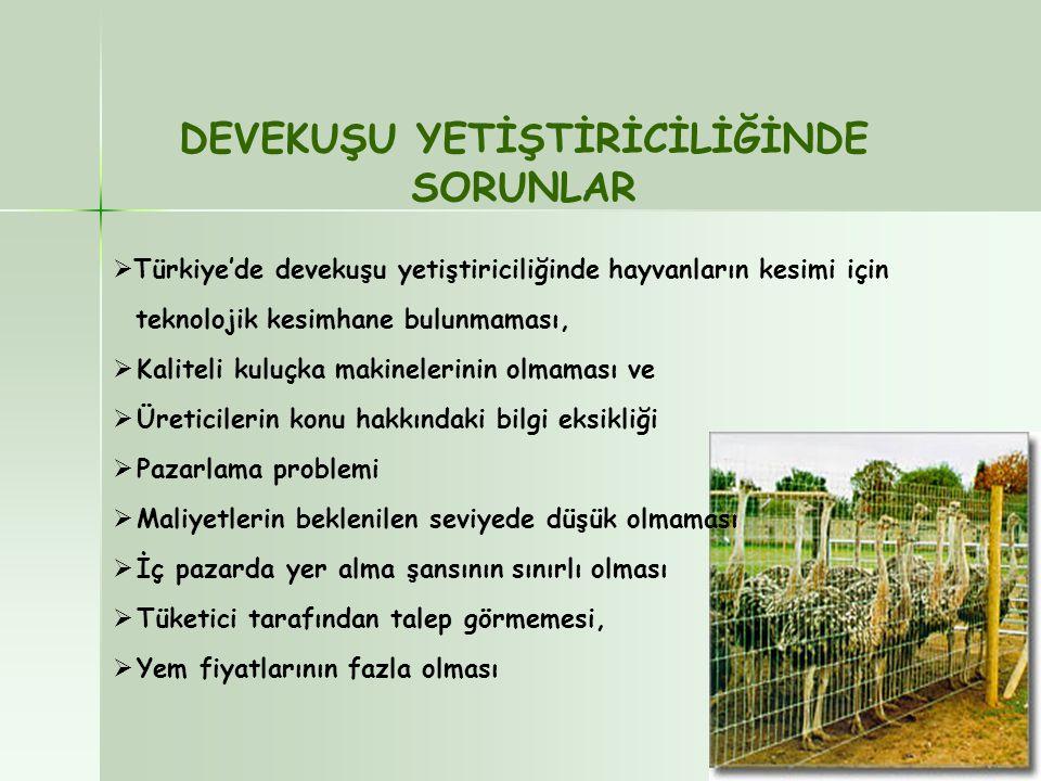  Türkiye'de devekuşu yetiştiriciliğinde hayvanların kesimi için teknolojik kesimhane bulunmaması,  Kaliteli kuluçka makinelerinin olmaması ve  Üret