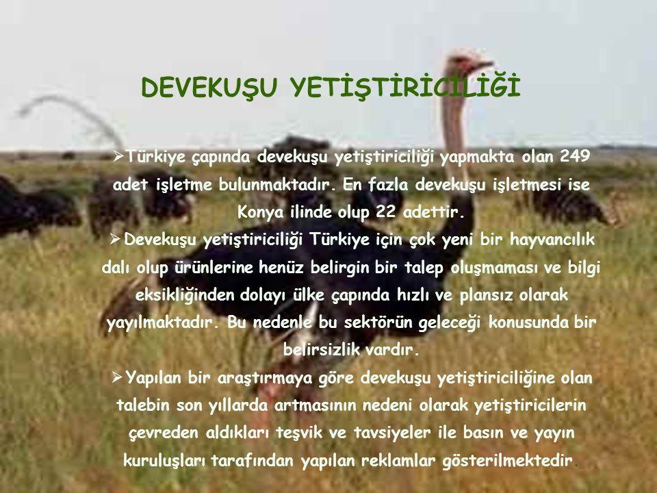 DEVEKUŞU YETİŞTİRİCİLİĞİ  Türkiye çapında devekuşu yetiştiriciliği yapmakta olan 249 adet işletme bulunmaktadır. En fazla devekuşu işletmesi ise Kony