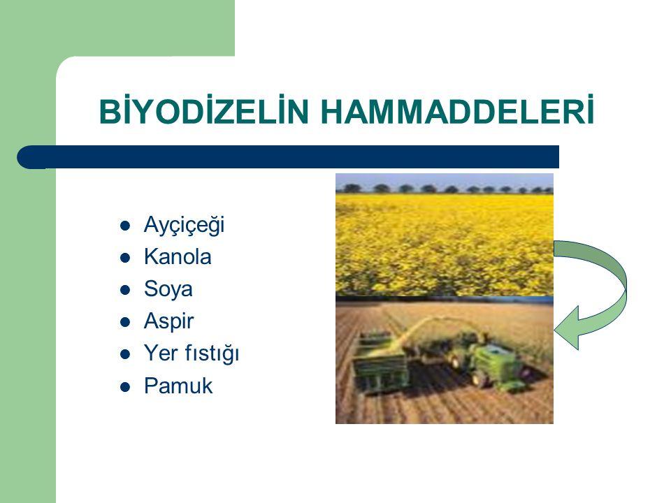 BİYODİZELİN HAMMADDELERİ Ayçiçeği Kanola Soya Aspir Yer fıstığı Pamuk