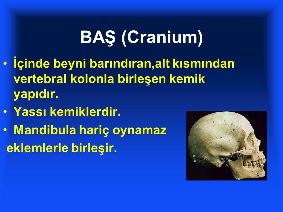 BAŞ (Cranium) İçinde beyni barındıran,alt kısmından vertebral kolonla birleşen kemik yapıdır. Yassı kemiklerdir. Mandibula hariç oynamaz eklemlerle bi