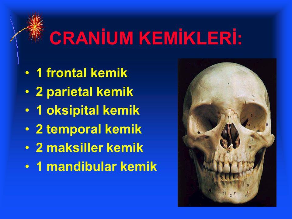 CRANİUM KEMİKLERİ: 1 frontal kemik 2 parietal kemik 1 oksipital kemik 2 temporal kemik 2 maksiller kemik 1 mandibular kemik