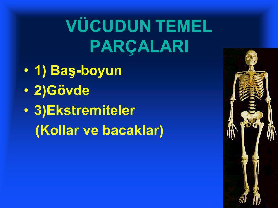 VÜCUDUN TEMEL PARÇALARI 1) Baş-boyun 2)Gövde 3)Ekstremiteler (Kollar ve bacaklar)