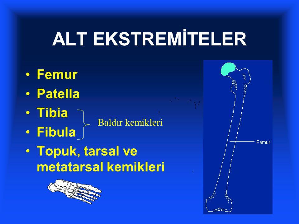 ALT EKSTREMİTELER Femur Patella Tibia Fibula Topuk, tarsal ve metatarsal kemikleri Baldır kemikleri