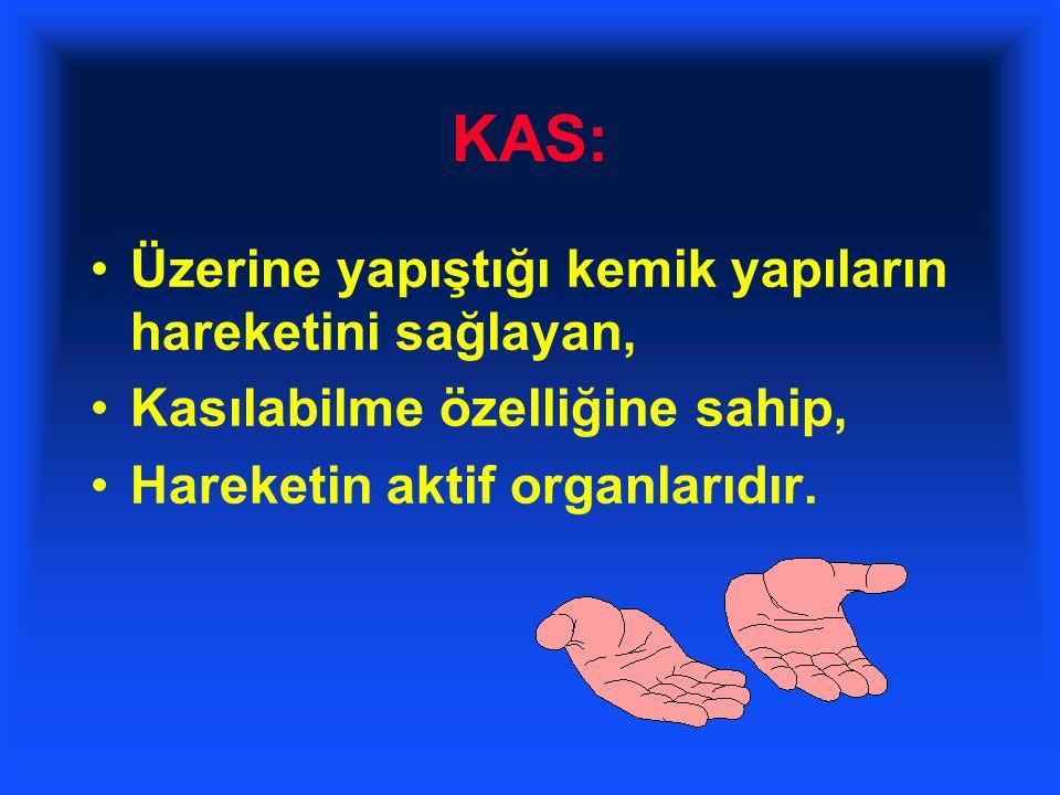 KAS: Üzerine yapıştığı kemik yapıların hareketini sağlayan, Kasılabilme özelliğine sahip, Hareketin aktif organlarıdır.