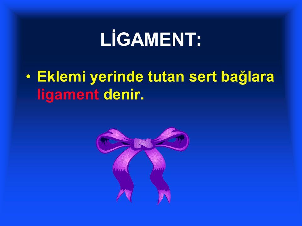 LİGAMENT: Eklemi yerinde tutan sert bağlara ligament denir.
