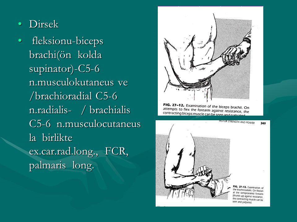 DirsekDirsek fleksionu-biceps brachi(ön kolda supinator)-C5-6 n.musculokutaneus ve /brachioradial C5-6 n.radialis- / brachialis C5-6 n.musculocutaneus la birlikte ex.car.rad.long., FCR, palmaris long.
