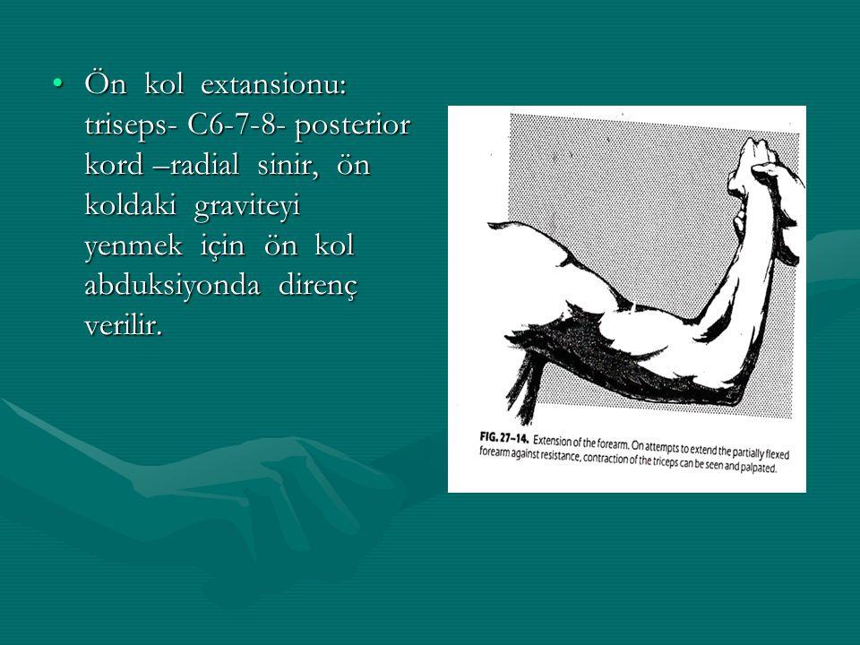 Ön kol extansionu: triseps- C6-7-8- posterior kord –radial sinir, ön koldaki graviteyi yenmek için ön kol abduksiyonda direnç verilir.Ön kol extansionu: triseps- C6-7-8- posterior kord –radial sinir, ön koldaki graviteyi yenmek için ön kol abduksiyonda direnç verilir.