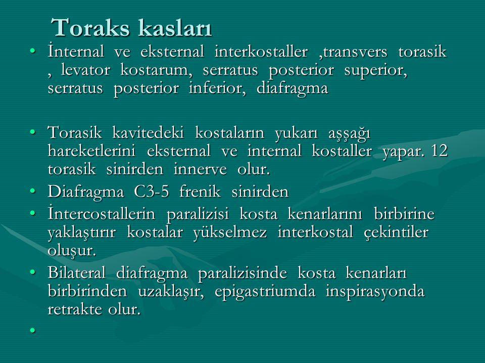 Toraks kasları İnternal ve eksternal interkostaller,transvers torasik, levator kostarum, serratus posterior superior, serratus posterior inferior, dia