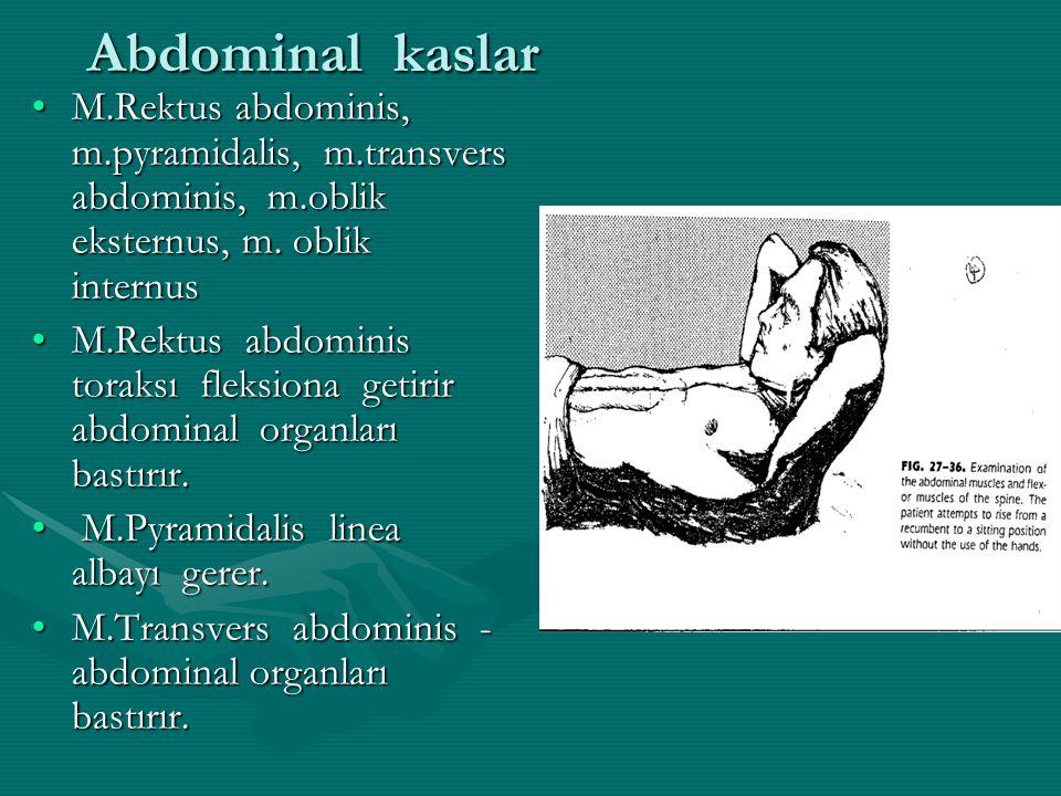 Abdominal kaslar M.Rektus abdominis, m.pyramidalis, m.transvers abdominis, m.oblik eksternus, m.