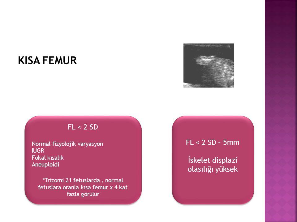 KISA FEMUR FL < 2 SD Normal fizyolojik varyasyon IUGR Fokal kısalık Aneuploidi *Trizomi 21 fetuslarda, normal fetuslara oranla kısa femur x 4 kat fazl