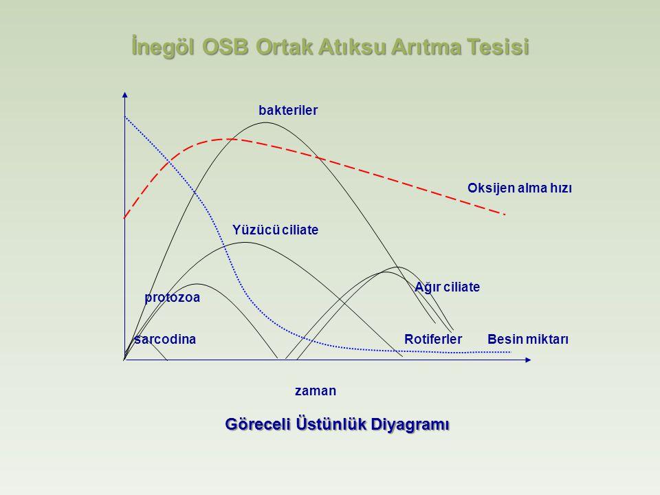 Oksijen alma hızı zaman Besin miktarı bakteriler Yüzücü ciliate protozoa sarcodina Ağır ciliate Rotiferler Göreceli Üstünlük Diyagramı İnegöl OSB Ortak Atıksu Arıtma Tesisi