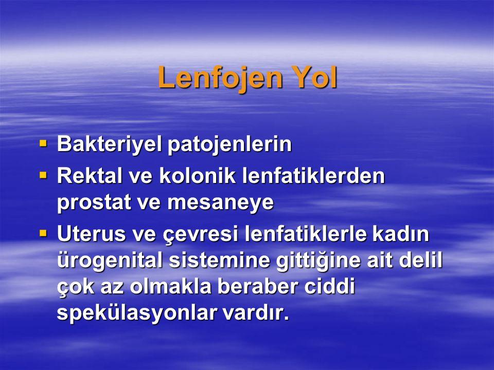 Lenfojen Yol  Bakteriyel patojenlerin  Rektal ve kolonik lenfatiklerden prostat ve mesaneye  Uterus ve çevresi lenfatiklerle kadın ürogenital siste