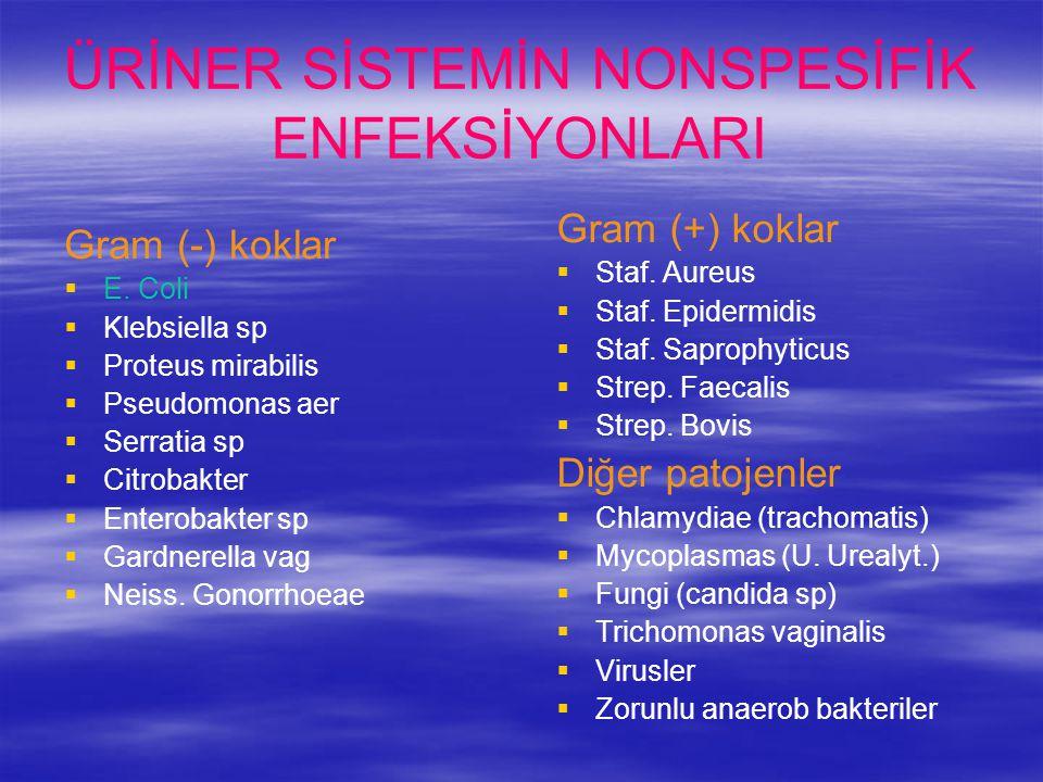 ÜRİNER SİSTEMİN NONSPESİFİK ENFEKSİYONLARI Gram (+) koklar   Staf. Aureus   Staf. Epidermidis   Staf. Saprophyticus   Strep. Faecalis   Stre