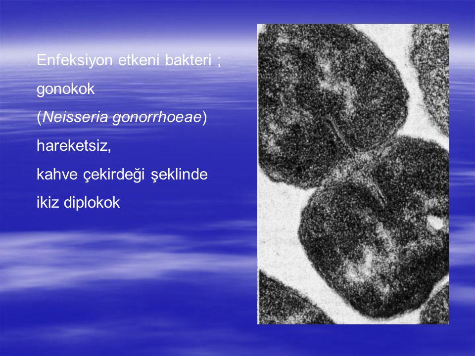 Enfeksiyon etkeni bakteri ; gonokok (Neisseria gonorrhoeae) hareketsiz, kahve çekirdeği şeklinde ikiz diplokok