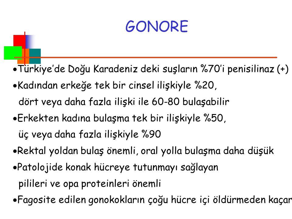 GONORE  Türkiye'de Doğu Karadeniz deki suşların %70'i penisilinaz (+)  Kadından erkeğe tek bir cinsel ilişkiyle %20, dört veya daha fazla ilişki ile