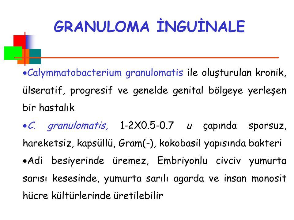 GRANULOMA İNGUİNALE  Calymmatobacterium granulomatis ile oluşturulan kronik, ülseratif, progresif ve genelde genital bölgeye yerleşen bir hastalık 