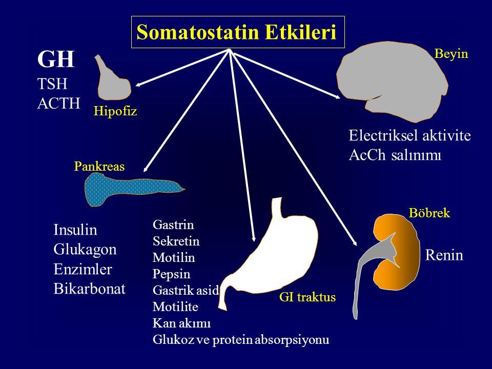 Somatostatin Etkileri GH TSH ACTH Insulin Glukagon Enzimler Bikarbonat Gastrin Sekretin Motilin Pepsin Gastrik asid Motilite Kan akımı Glukoz ve prote