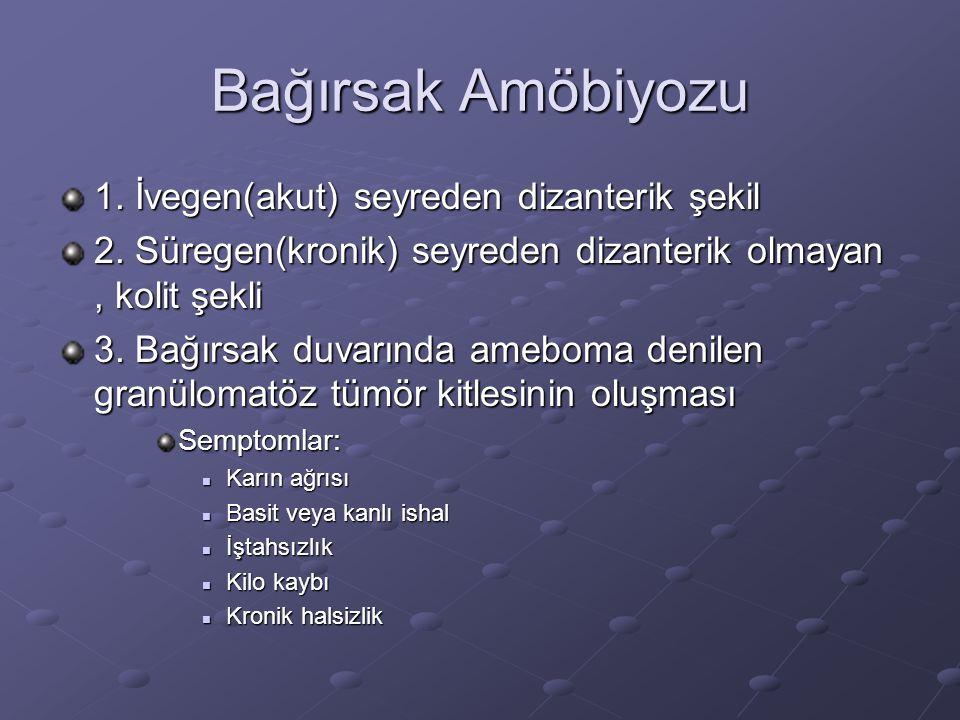 Bağırsak Amöbiyozu 1. İvegen(akut) seyreden dizanterik şekil 2. Süregen(kronik) seyreden dizanterik olmayan, kolit şekli 3. Bağırsak duvarında ameboma