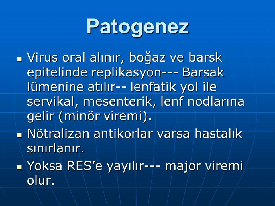 Patogenez Virus oral alınır, boğaz ve barsk epitelinde replikasyon--- Barsak lümenine atılır-- lenfatik yol ile servikal, mesenterik, lenf nodlarına g