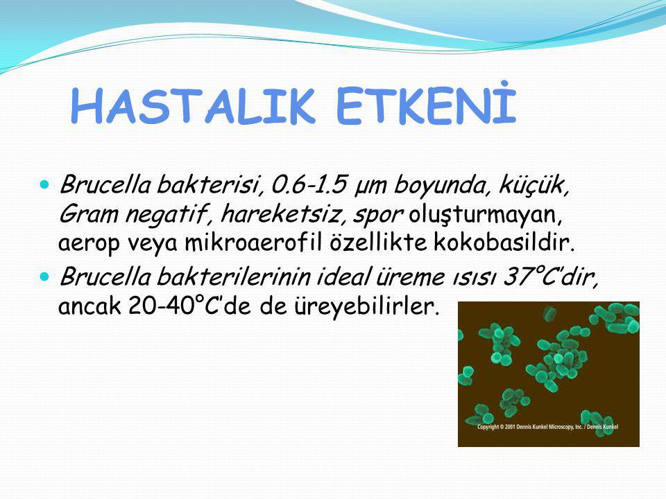 HASTALIK ETKENİ Brucella bakterisi, 0.6-1.5 μm boyunda, küçük, Gram negatif, hareketsiz, spor oluşturmayan, aerop veya mikroaerofil özellikte kokobasi