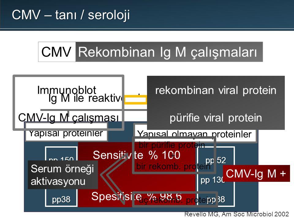 Rekombinan Ig M çalışmalarıCMV CMV – tanı / seroloji Ig M ile reaktive olan CMV proteinleri Yapısal proteinler pp 150 pp 65 pp38 pp 52 pp 130 * pp38 Y
