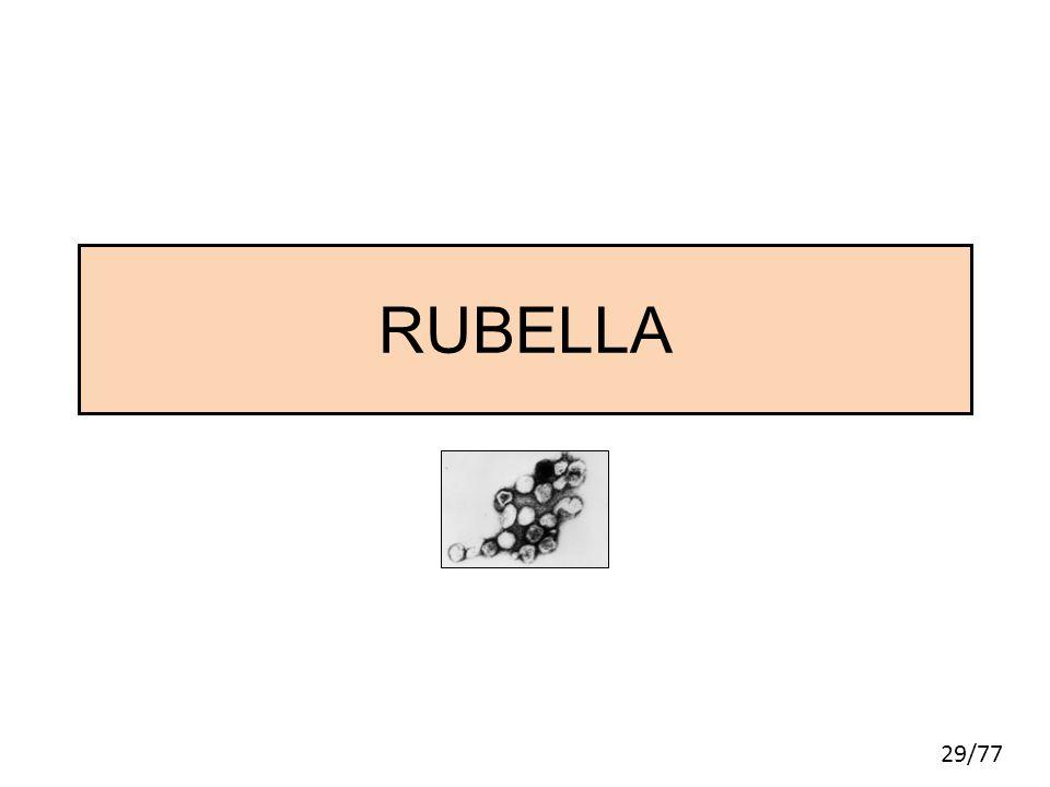 29/77 RUBELLA