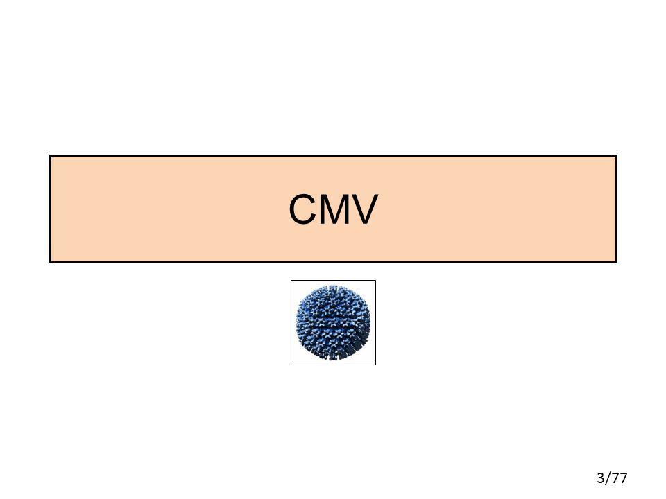 3/77 CMV