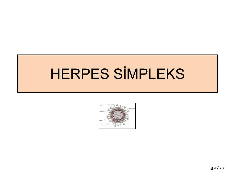 48/77 HERPES SİMPLEKS