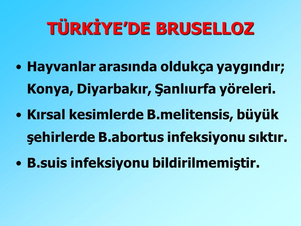 TÜRKİYE'DE BRUSELLOZ Hayvanlar arasında oldukça yaygındır; Konya, Diyarbakır, Şanlıurfa yöreleri. Kırsal kesimlerde B.melitensis, büyük şehirlerde B.a