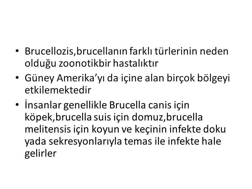 Brucellozis,brucellanın farklı türlerinin neden olduğu zoonotikbir hastalıktır Güney Amerika'yı da içine alan birçok bölgeyi etkilemektedir İnsanlar genellikle Brucella canis için köpek,brucella suis için domuz,brucella melitensis için koyun ve keçinin infekte doku yada sekresyonlarıyla temas ile infekte hale gelirler